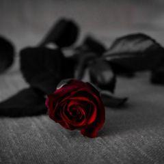 Las quince rosas de Grazalema