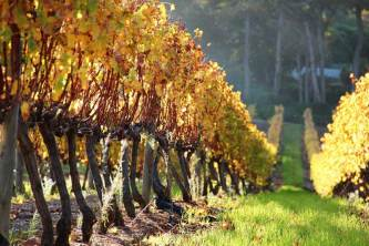 Groot Constantia's vineyards are pristine, and very photographer friendly throughout the year