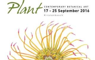 Kirstenbosch-Plant