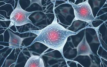 antioxidant-cells