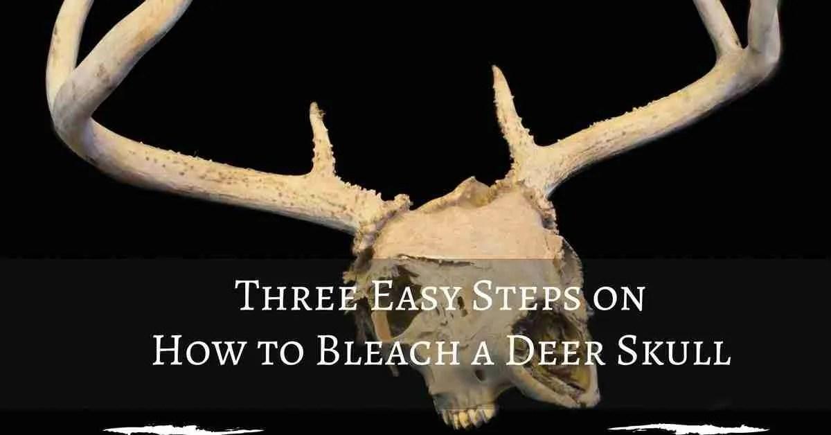 Three Easy Steps On How To Bleach A Deer Skull Captain