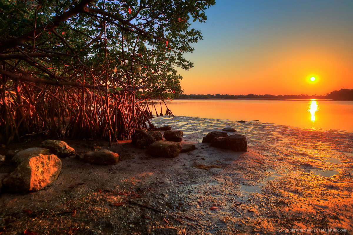 Fall In Chicago Wallpaper Sunset At Lake Worth Lagoon Singer Island Mangrove Tree