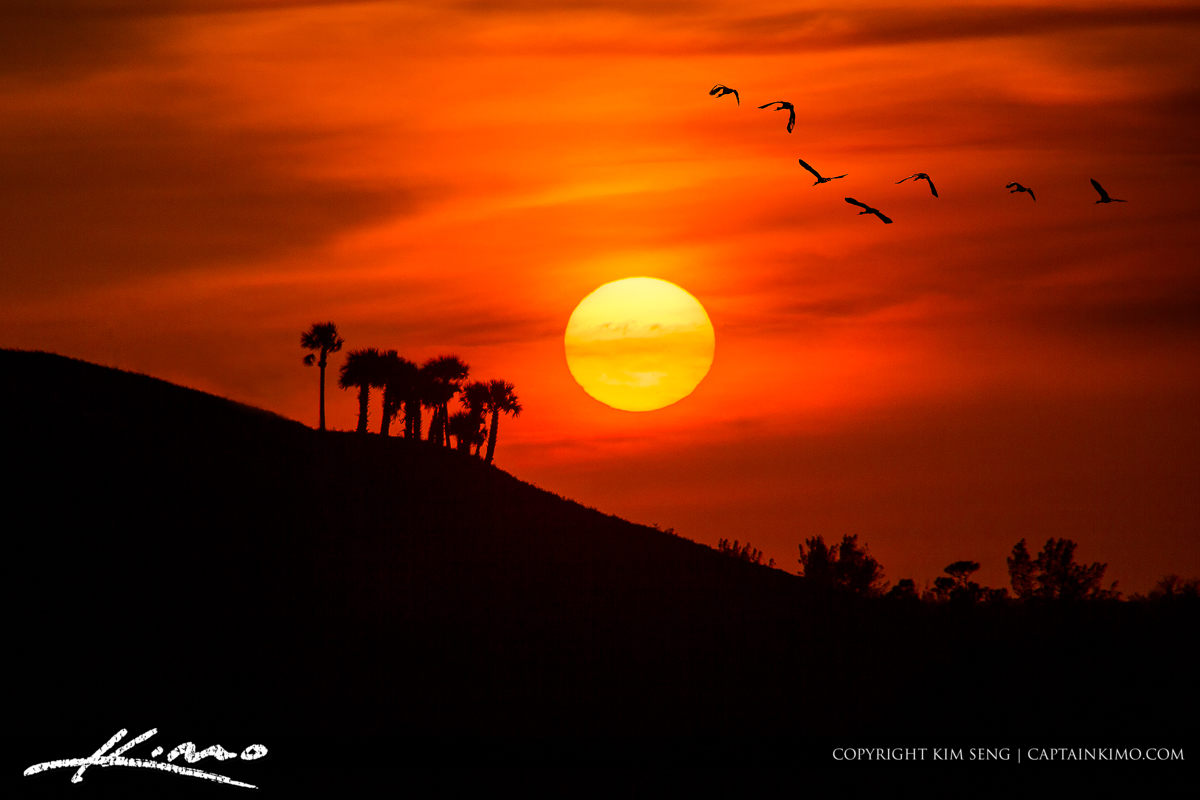 Good Evening Hd Wallpaper Birds Flying Into The Sunset Over Mountain In Florida