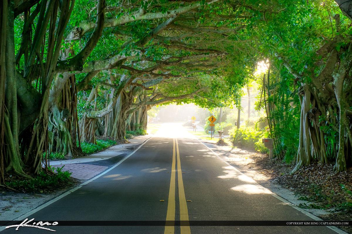 Fall Leaves Desktop Wallpaper Free Banyan Tree Covered Road Stuart Florida