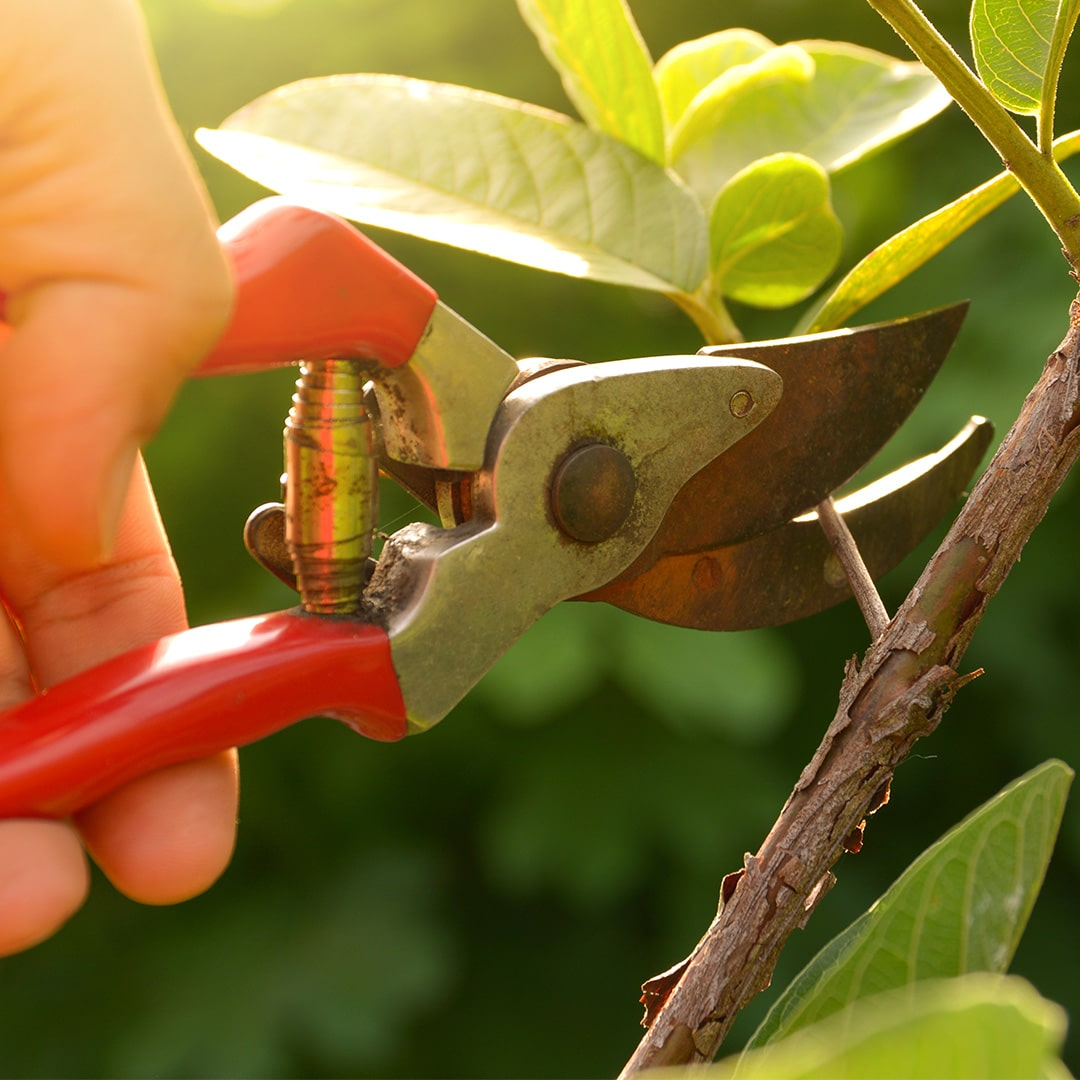 Tree Pruning Tools 5 Tools For Pruning Trees And Shrubs Cardinal Lawns