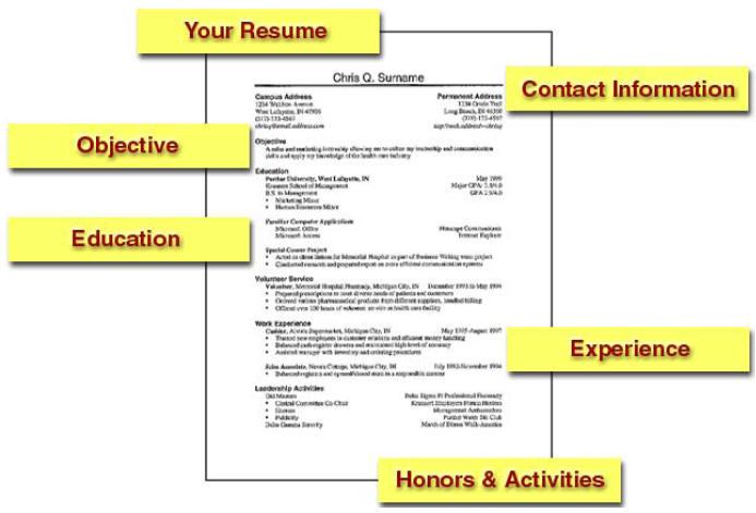 sample resume free download, download cv, Free resume