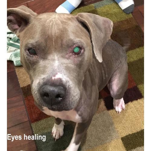Medium Crop Of Dog Eye Infection