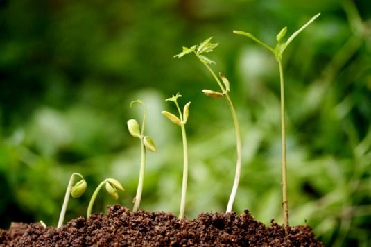 church growth barriers
