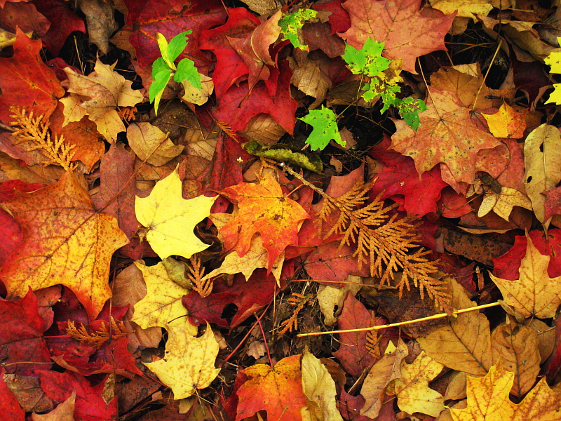 Large Fall Desktop Wallpaper Thanksgiving Prayers Carfleo