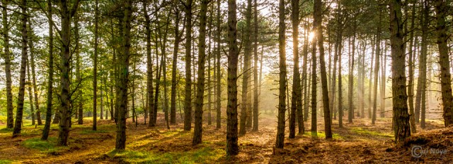 20141012_083_AWD_Carl Noya_HDR_Website Slider_(960x350pix)