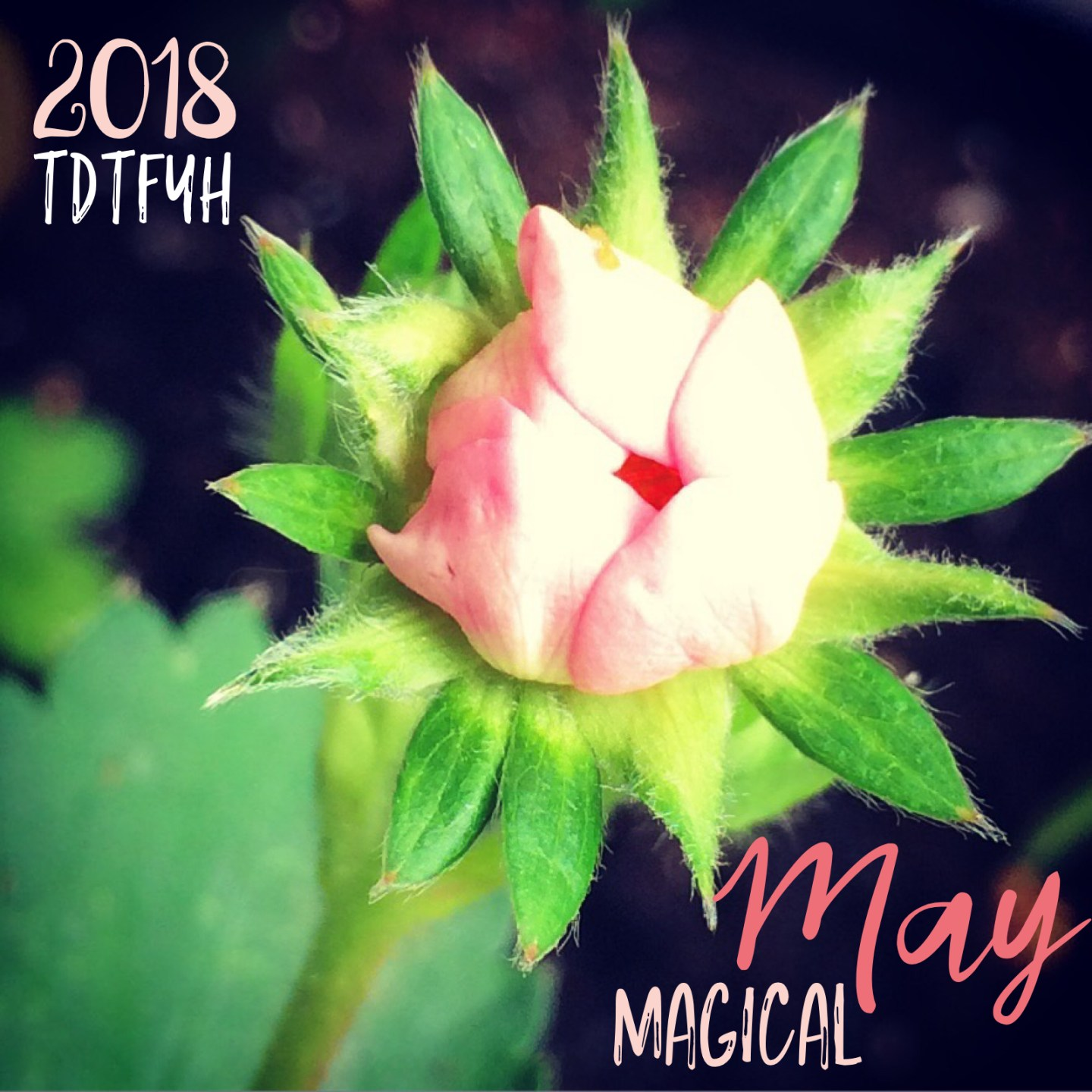 Things we'll do this month: May