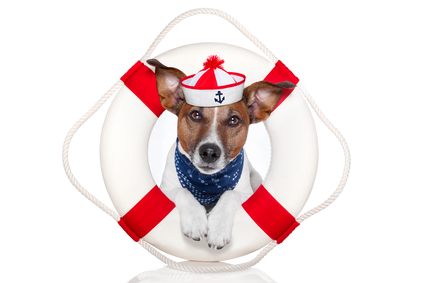 dog with sifesaver