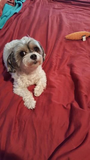 dog-with-blog