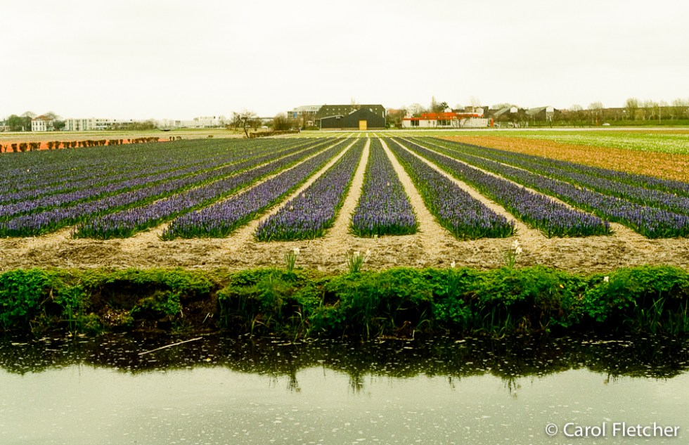 Keukenhof fields and canals