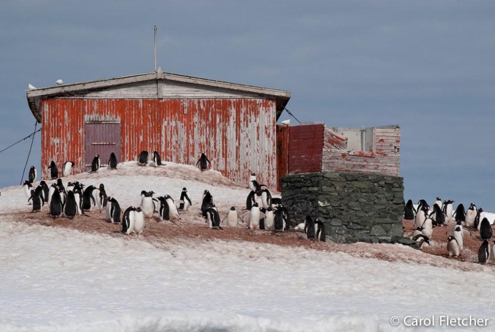 Argentine shelter