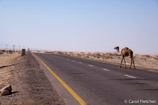 And sure enough...a camel crossing!