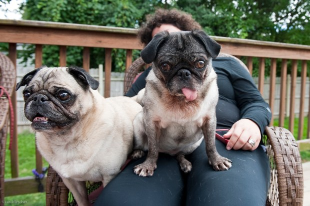 Pet shop boy Otis--and Ruby, the slightly askew rescue