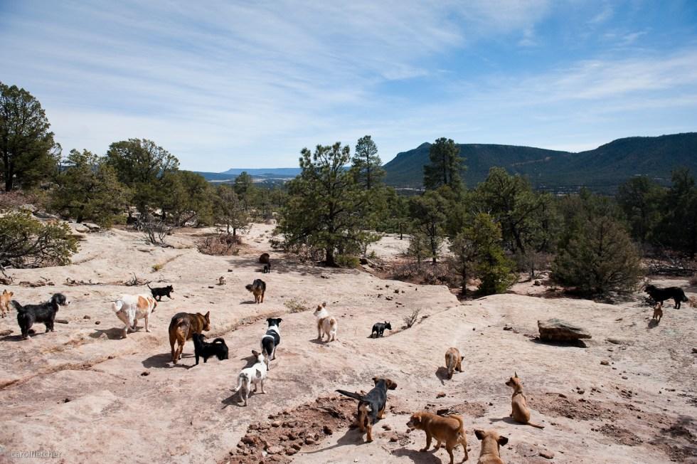 New Mexico dog walk