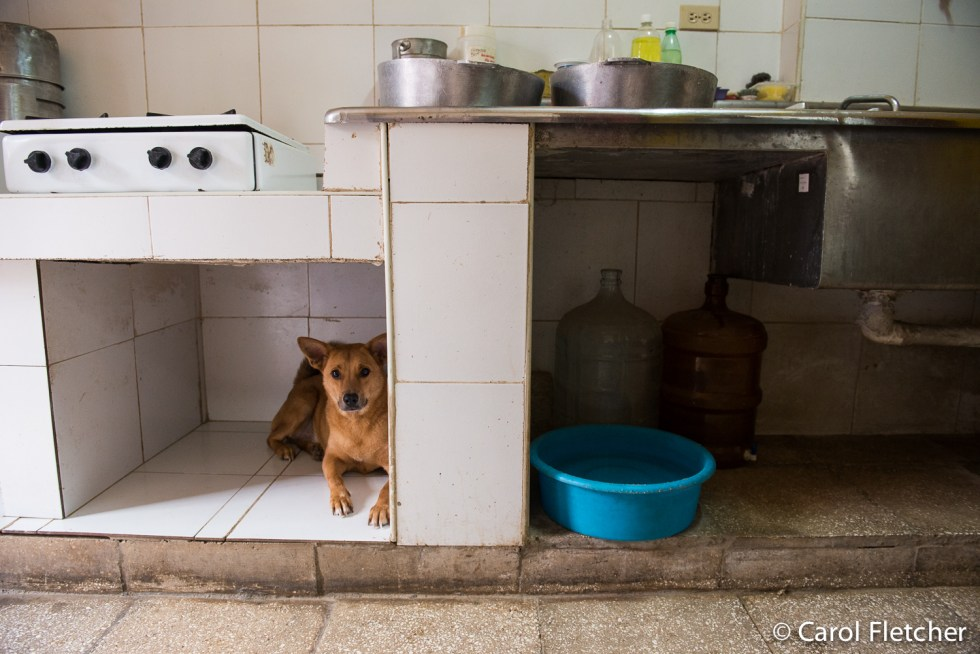 Dog rests in a built-in space in Aniplant kitchen