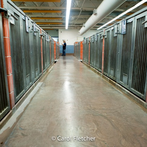 Animal Care control shelter rows cages