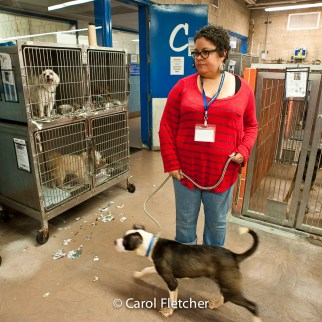 shelter cages dogs rescuer