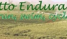 palmetto endurance