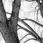 cottonwood grande