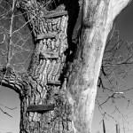 tree rungs