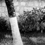 palm n wall