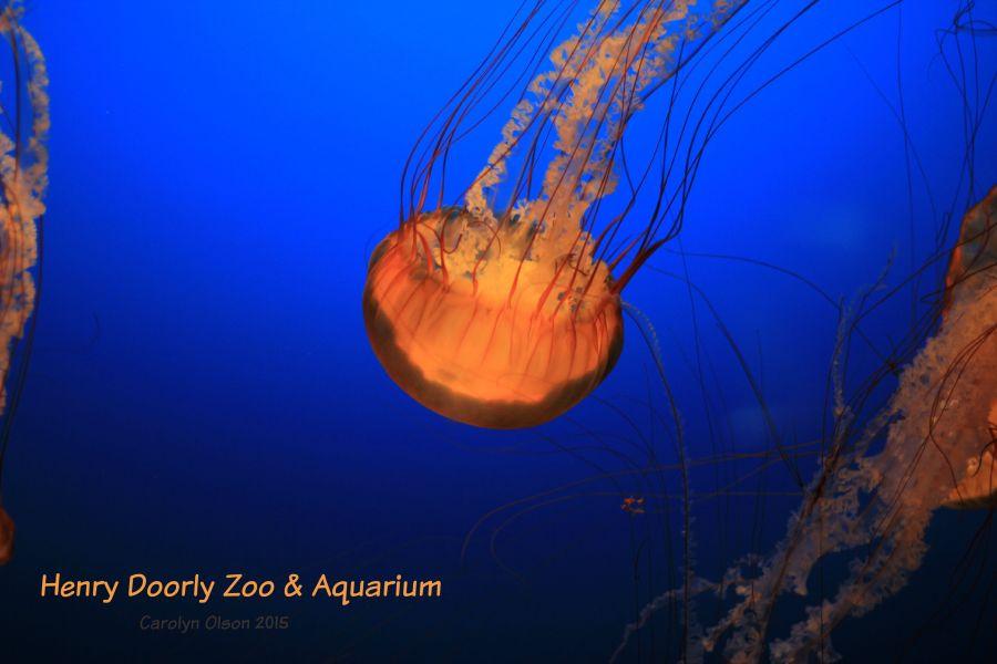 Jelly Fish Henry Doorly Zoo and Aquarium