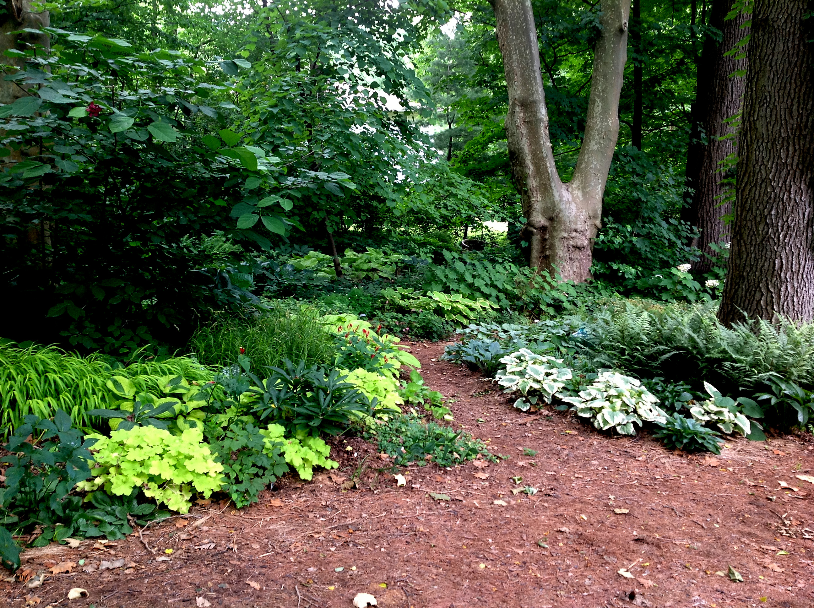 You Asked For The Long View Part 2 Carolyn39s Shade Gardens
