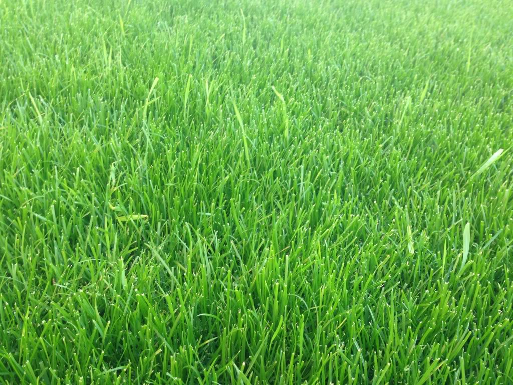 Fake Grass Prices Buy Artificial Lawn Sports Artificial Grass Dubai