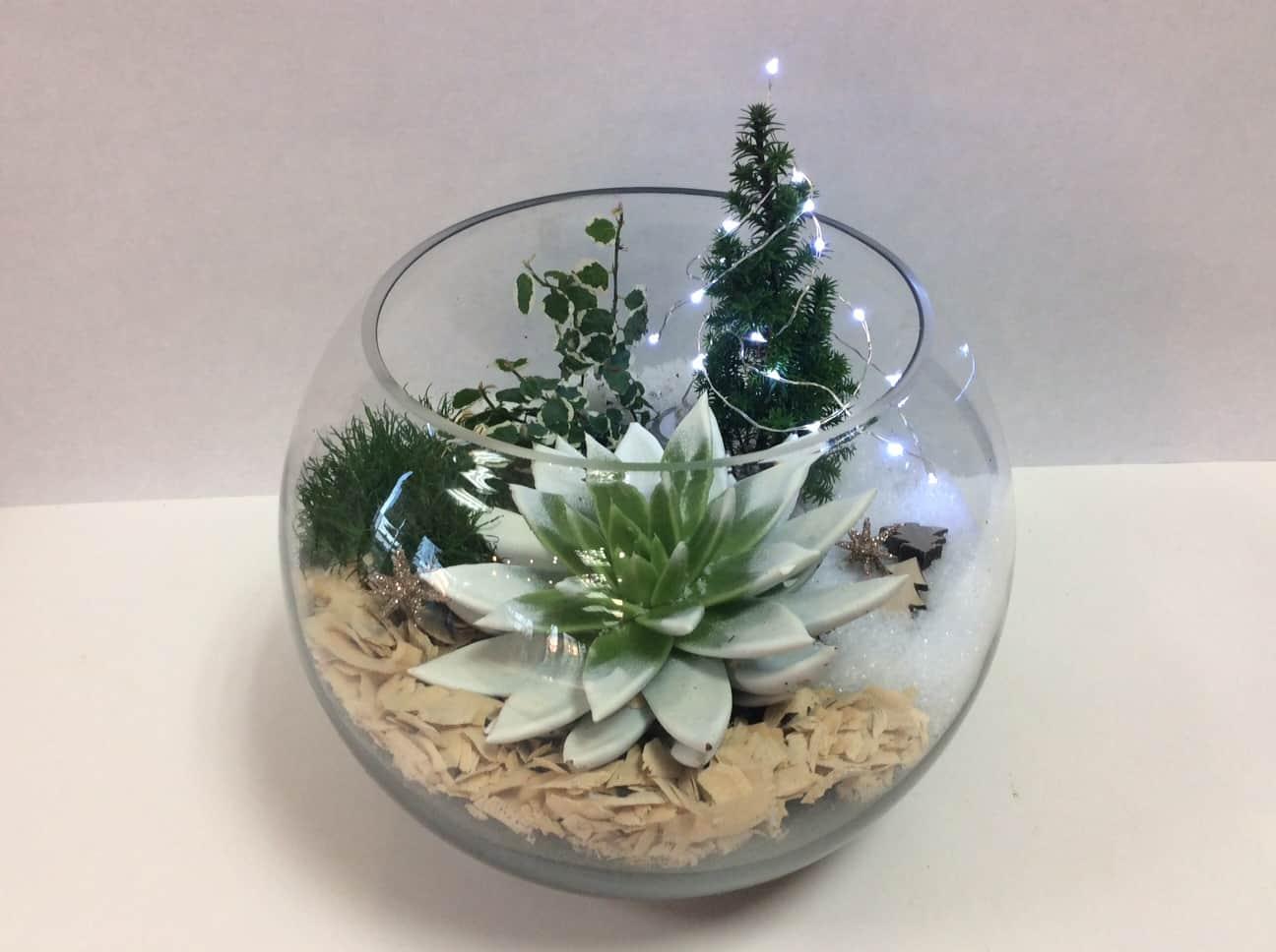 Plantes Pour Terrarium Ferme Les Plantes D Interieur Se