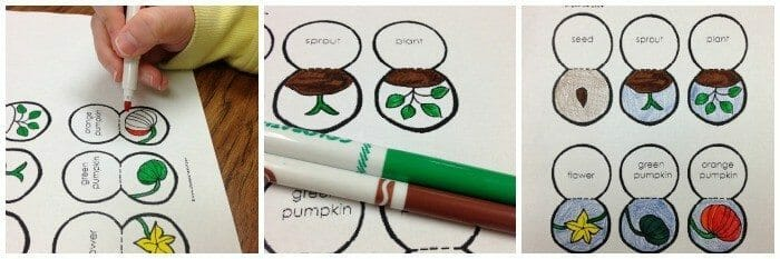 Lifecycle of a Pumpkin Craft