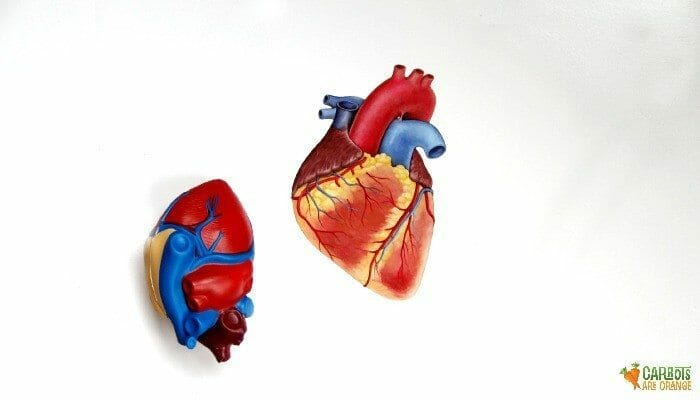 Learn Parts of the Heart with Kids