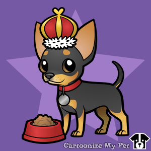 king black and tan chihuahua