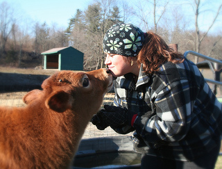 Adoption coordinator Erin gets a kiss from a rescued veal calf
