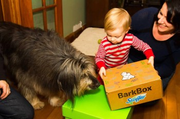 Life as a Swiffer Fanatic, Vol. 2 — Fighting Messes from Other People's Pooches... Because #ShedHappens — Henry and Sydney Examine the Swiffer Green Box and BarkBox