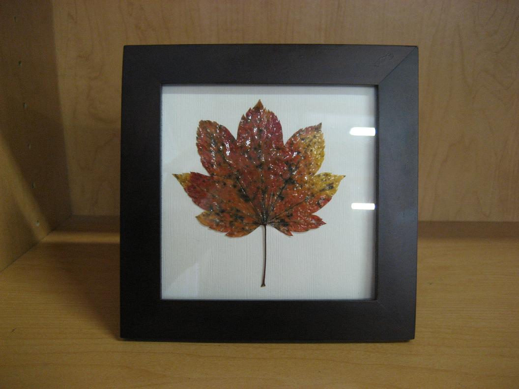 How To Frame Pictures Diy How To Frame Autumn Leaves The Cash4books Blog