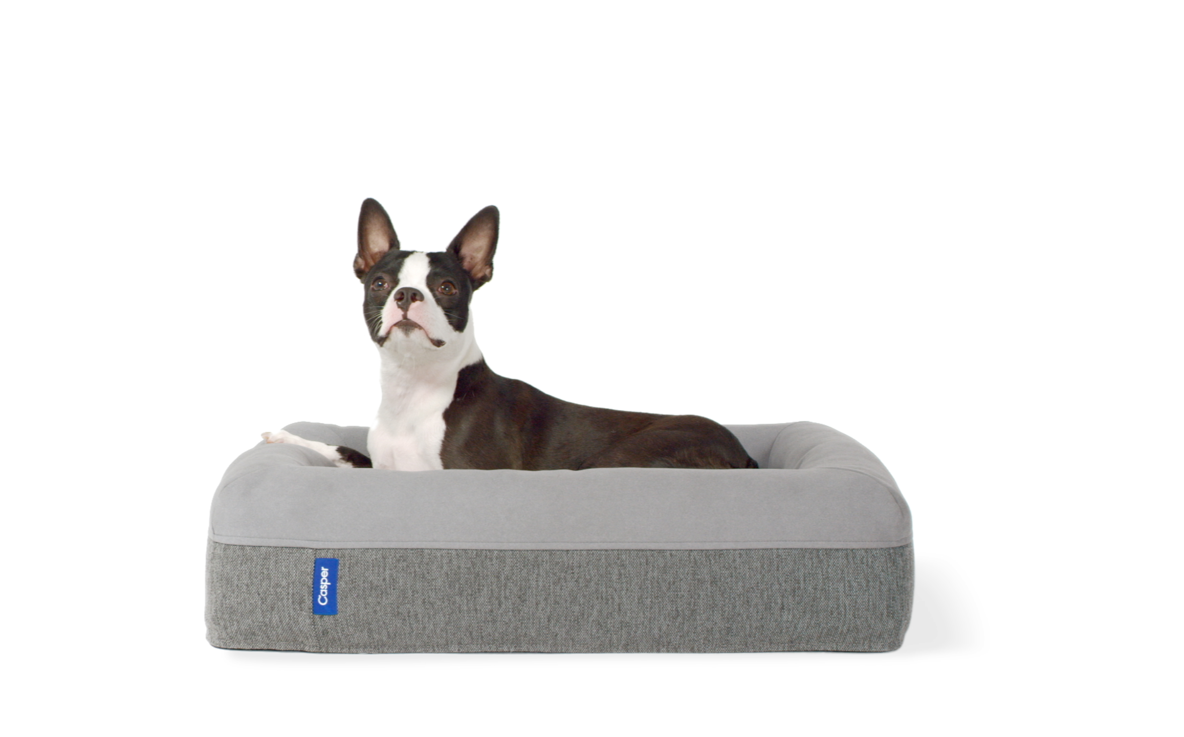 Dog Beds Pet The Best Dog Beds For 2018 Healthy Paws Pet Insurance