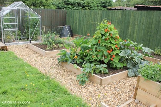 spring garden veggit patch-3