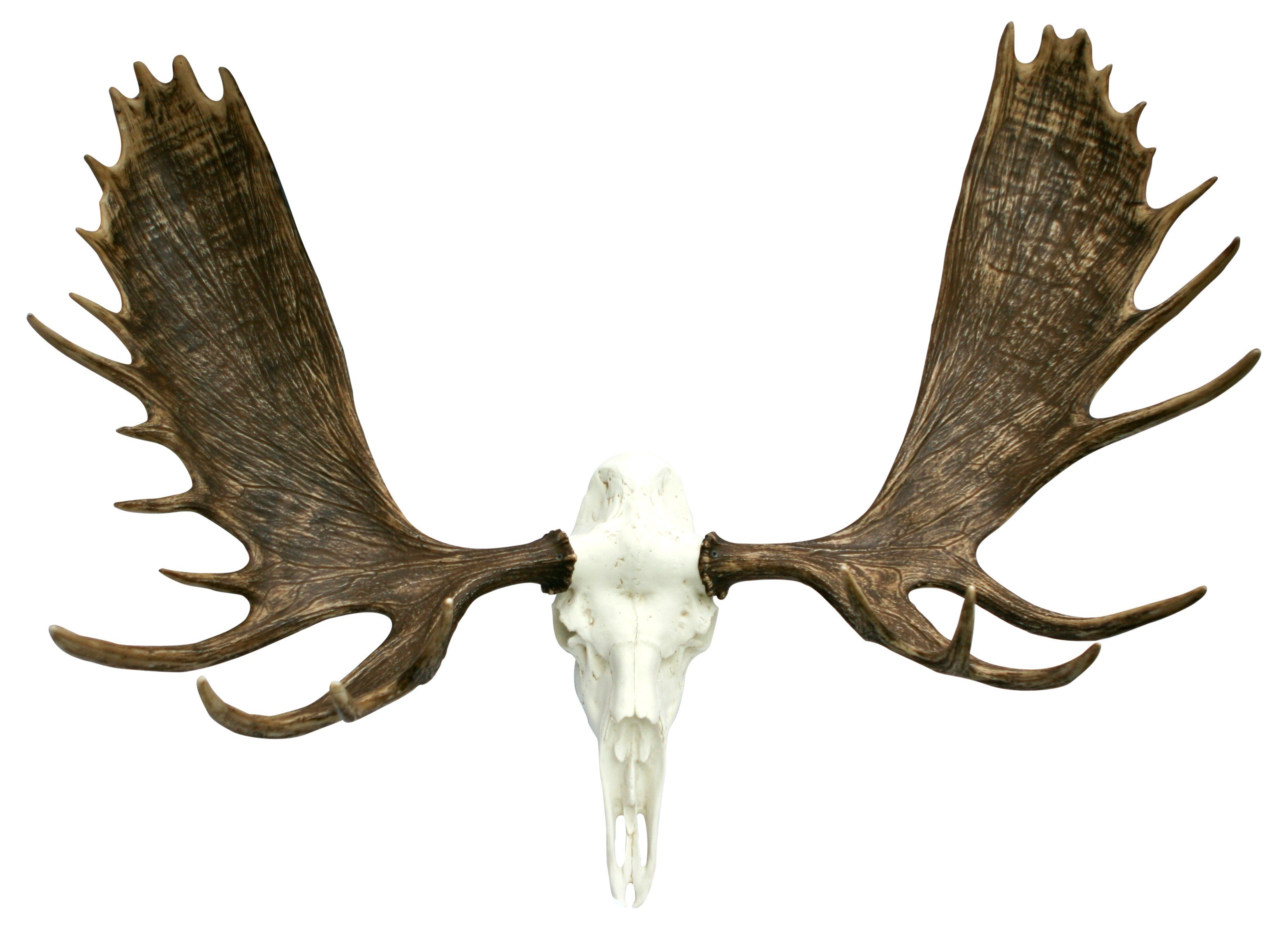 Fake Deer Skull And Antlers European Alaskan Moose Mount Cast Horn Designs