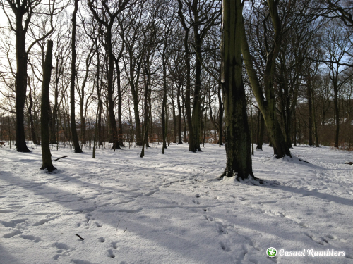 Wickersley Wood Walk - Winter