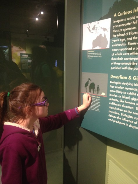my daughter reading the information about The Islands exhibit at the Harvard Museum of Natural History