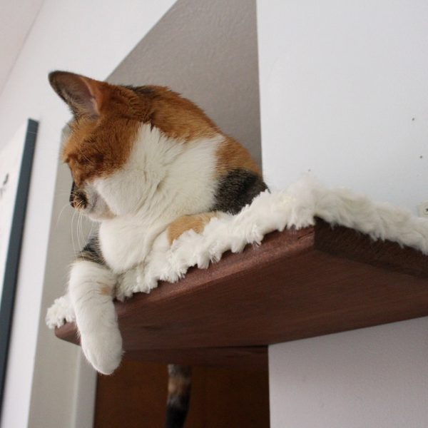 Corner Shelf Fabric-covered Corner Cat Shelf ⋆ Catastrophic Creations