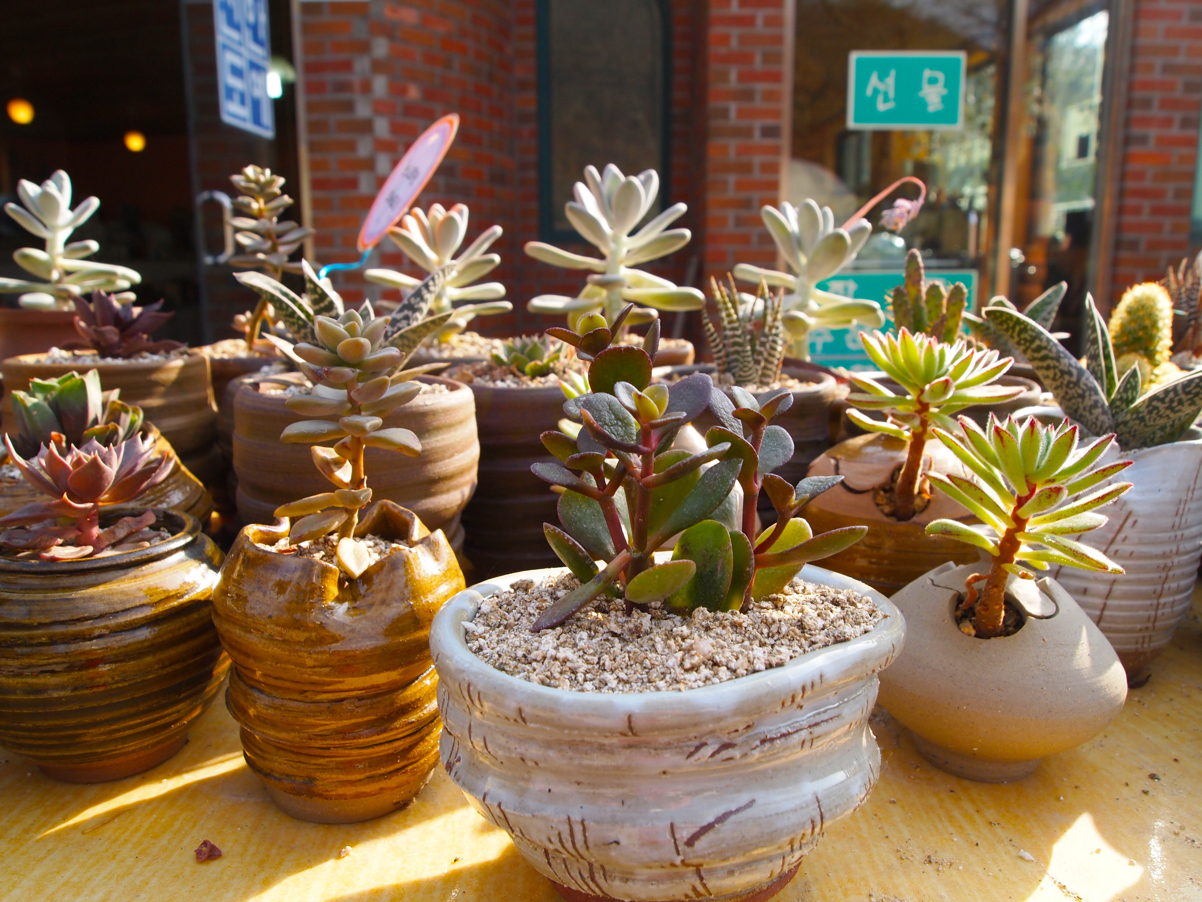 Cactus Pots For Sale Naesosa Temple Catbird In Korea