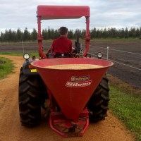 Sowing our Oats