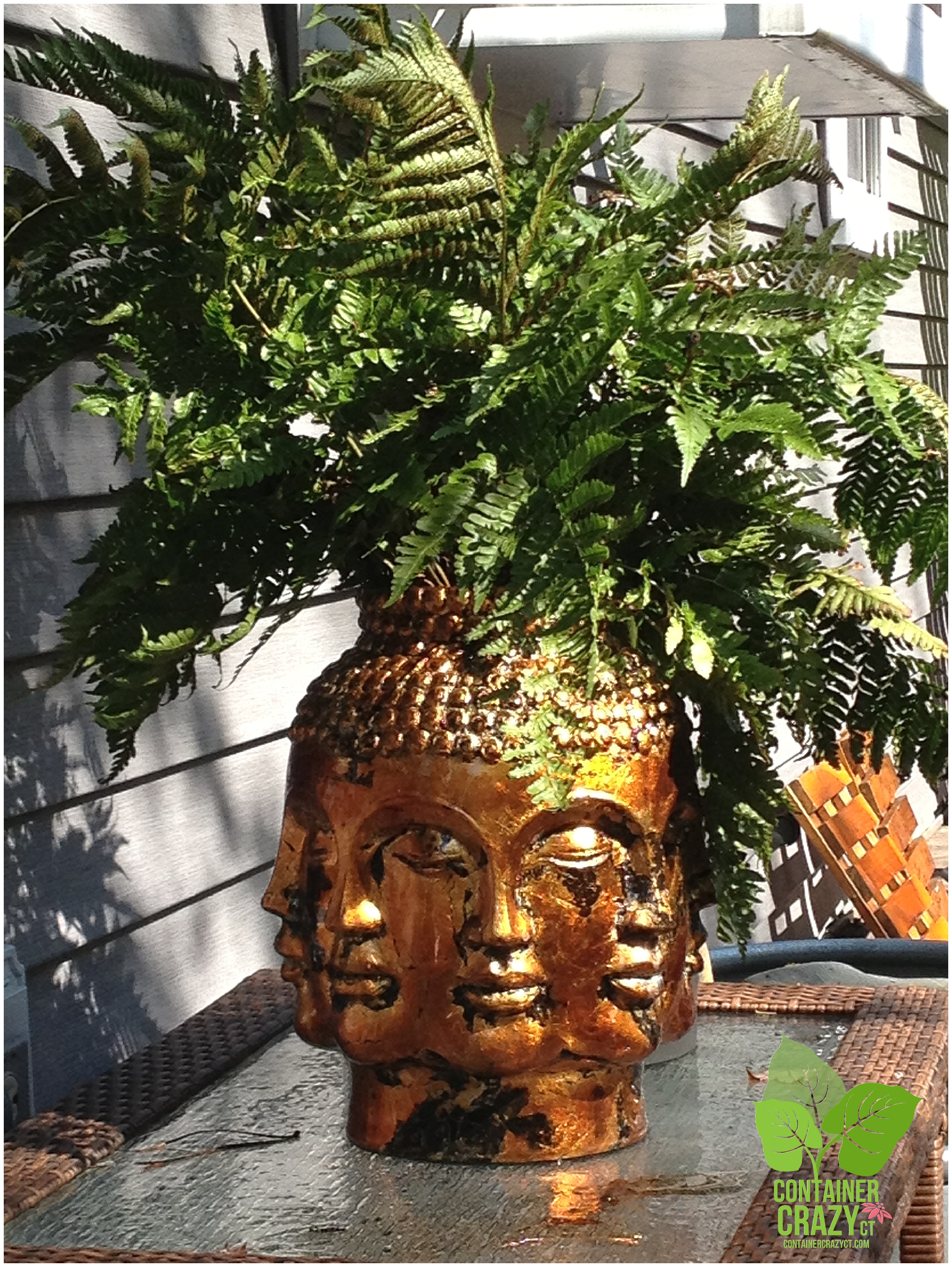 Head Planters Flashback Friday Golden Head Planter With A Native Autumn Fern
