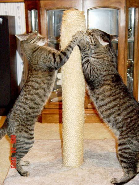 Feeding Your Cat Know the Basics of Feline Nutrition \u2013 Common Sense