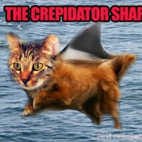CatVidFest and Crepidator Sharks